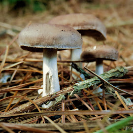 by Denise O'Hern - Nature Up Close Mushrooms & Fungi