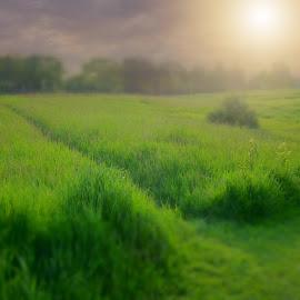 by Jessica Eirich - Landscapes Prairies, Meadows & Fields