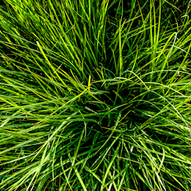 Green green grass! by Jesus Giraldo - Nature Up Close Leaves & Grasses ( grenn, concept, nature, grass, art, composition, expresion, beauty )