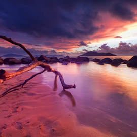 An old tree by Catur G Prakasa - Landscapes Sunsets & Sunrises ( beaches, sunset, beach, landscapes, landscape )
