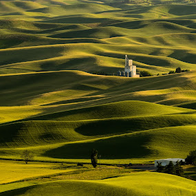 Shadows by Kenneth Lui - Landscapes Prairies, Meadows & Fields ( tourist attraction, palouse, wavy look, yellow, landscape, tourist destination, farm, washington, rolling hills, nature, shadow, dark, forms, black, fields, wheat, building, farm land, dry, colors, green, waves, central washington, deep shadow, wheat fields, depth, shapes, barn house, sunset, outdoor, trees,  )