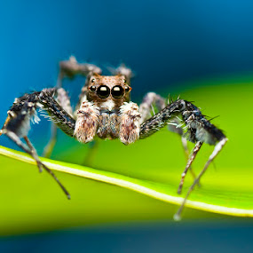waiting by Pak Lang - Animals Insects & Spiders ( macro, nature, spider, insect,  )
