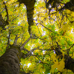 Autumn by Joseph Callaghan - Nature Up Close Trees & Bushes ( autumn, green, fall, yellow, up )