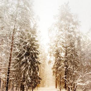 лес и ветер.jpg