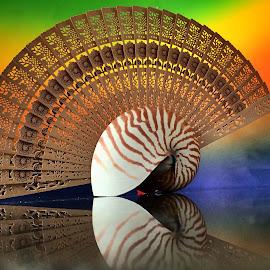 Seashell and fan by Janette Ho - Artistic Objects Still Life