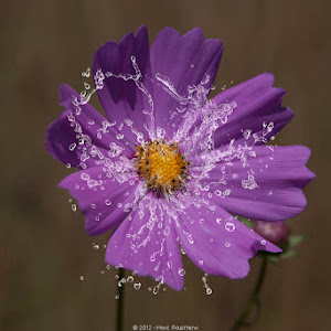 Flowers-2012-7323-Edit-0001-PIX.jpg
