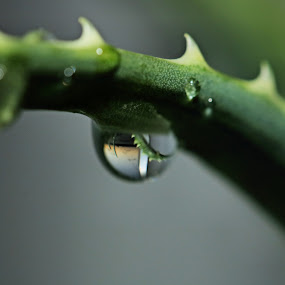 The world in a droplet by Clarissa Human - Abstract Water Drops & Splashes ( water, aloe, reflection, droplet, drop,  )