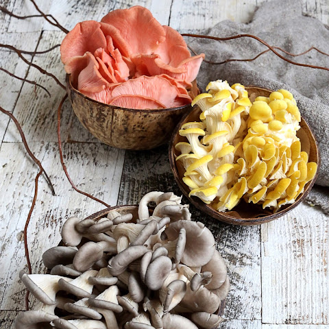Pickled Tree Oyster Mushroom
