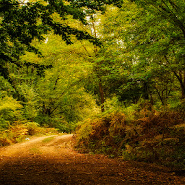 Road in the forest by Costin Mugurel - Landscapes Forests ( nature, autumn, forest, road, landscape )