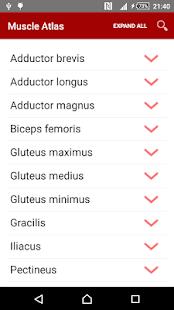 Anatomy: Atlas of Muscles APK for Bluestacks