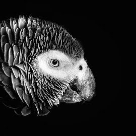 by Michael Böckling - Black & White Animals