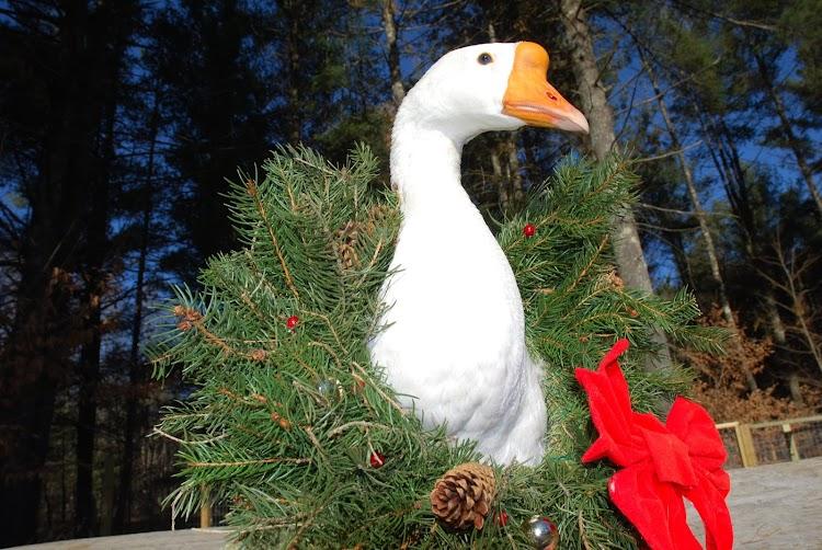 Christmas decoration Strange Christmas Traditions