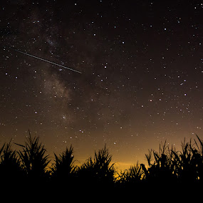 Perseid Meteor Above a Corn Field  by Amanda  Castleman  - Landscapes Starscapes ( sky, nature, stars, shooting star, meteor, night, landscape, galaxy,  )