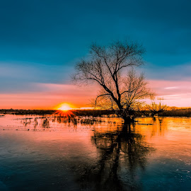 Winter Solstice Icy Sunset by Bob  Juarez - Landscapes Sunsets & Sunrises ( sunset, trees, winter solstice, icy water )