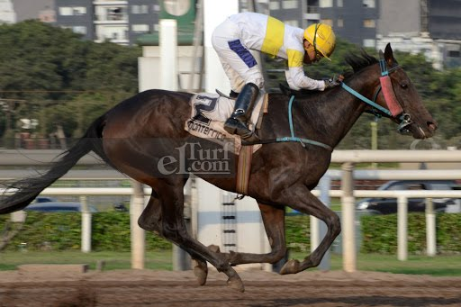 Legend Of Galia (Lido Palace) se adjudica Handicap (1400m-Arena-MONT). - Staff ElTurf.com