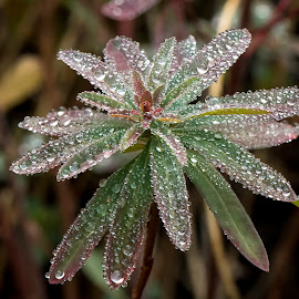 by Arnaldo Ronca - Nature Up Close Leaves & Grasses ( plant, fall, leaves, garden, rain, droplets )