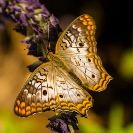 Butterfly Up Close by Dee Haun - Animals Insects & Spiders ( butterfly, disney world, 180507f2270ce2, animals, insects,  )