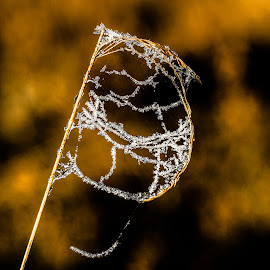 Frosting on spiderweb on twig by Natasja Martijn - Nature Up Close Webs ( macro, winter, frosting, spiderweb, web )
