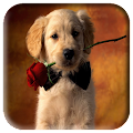 Dog Wallpapers APK for Ubuntu