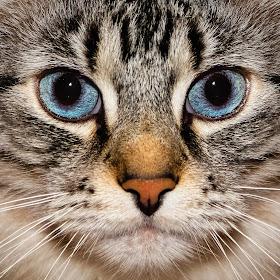 Milo's Eyes.jpg