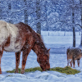 Visitors for Breakfast by Twin Wranglers Baker - Animals Horses