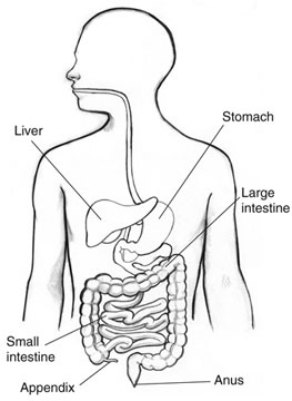 Health Tips: What is the appendix?