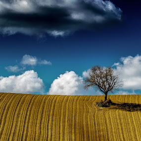 Italian Hills by Emanuele Zallocco - Nature Up Close Trees & Bushes