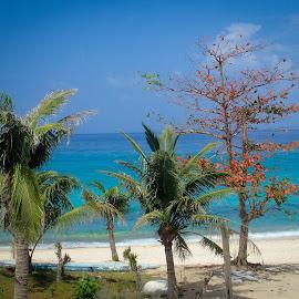 Tropical Beach by Sergei Tokmakov - Landscapes Beaches ( nature, cebu, sea, tourism, tokmakov, travel, beach, malapascua, philippines, tropics )