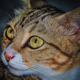 by SweeMing YOUNG - Animals - Cats Portraits