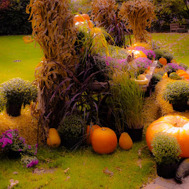 FALL HARVEST by Debra Singleton - Novices Only Flowers & Plants ( pumpkings, park, color, seasons, fall, flowers )