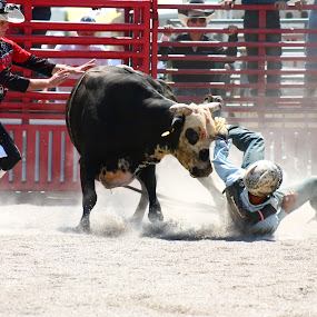 He Ain't Hooky  by Brian  Shoemaker  - Sports & Fitness Rodeo/Bull Riding ( hooked, bull rider, cowboy, hooky, rodeo problems, rodeo )
