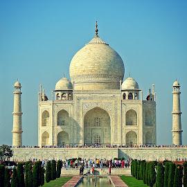 Taj Mahal by Pradeep Kumar - Buildings & Architecture Public & Historical