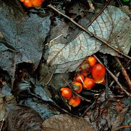 Winter   garland by Gordon Simpson - Nature Up Close Mushrooms & Fungi