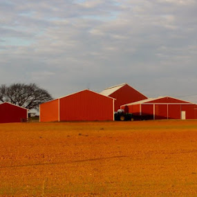 Red barns by Karen Beasley - Buildings & Architecture Other Exteriors ( yellow/red, barn, farm, red buildings )