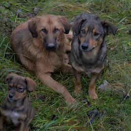by Драган Рачићевић - Animals - Dogs Portraits