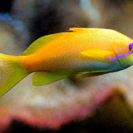Aquarium by Claudiu Petrisor - Animals Fish ( green, fish, violet, germany, yellow )