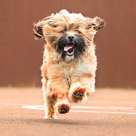 by Jamie Keith - Animals - Dogs Running