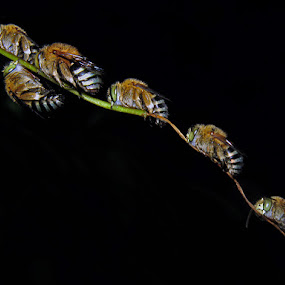 nt by Nur Haryadi - Animals Insects & Spiders