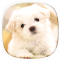 Cute Puppy Wallpapers: Cutest Pictures of Puppies APK for Ubuntu