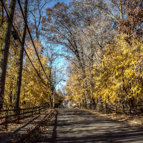 Autumn Street by Giantfromsiberia Photographer - Nature Up Close Trees & Bushes ( fence, autumn, street, fall, yellow, leaves )