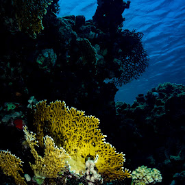 sharm_uw6 by Emanuele Pola - Animals Sea Creatures ( nauticam, underwater, sharm el sheikh, diving, olympus )