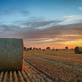 Harvest Field Sunrise by Peter Jarvis - Landscapes Prairies, Meadows & Fields ( straw, norfolk, bales, sunrise, fields )