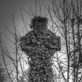 Cross by Josh Hilton - Artistic Objects Other Objects ( greyscale, gothic, vines, celtic, black and white, cross )