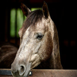 by Mike Craig - Animals Horses