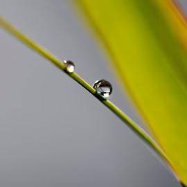 by Pavel Vlček - Nature Up Close Natural Waterdrops
