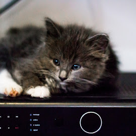On top of the Sky box by Edward Swift - Animals - Cats Kittens ( kitten, cat, technology, animal )