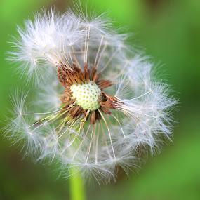 by Carmen Baltianu - Flowers Flowers in the Wild