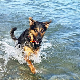 Life's a beach by Anthony Carlo - Animals - Dogs Running