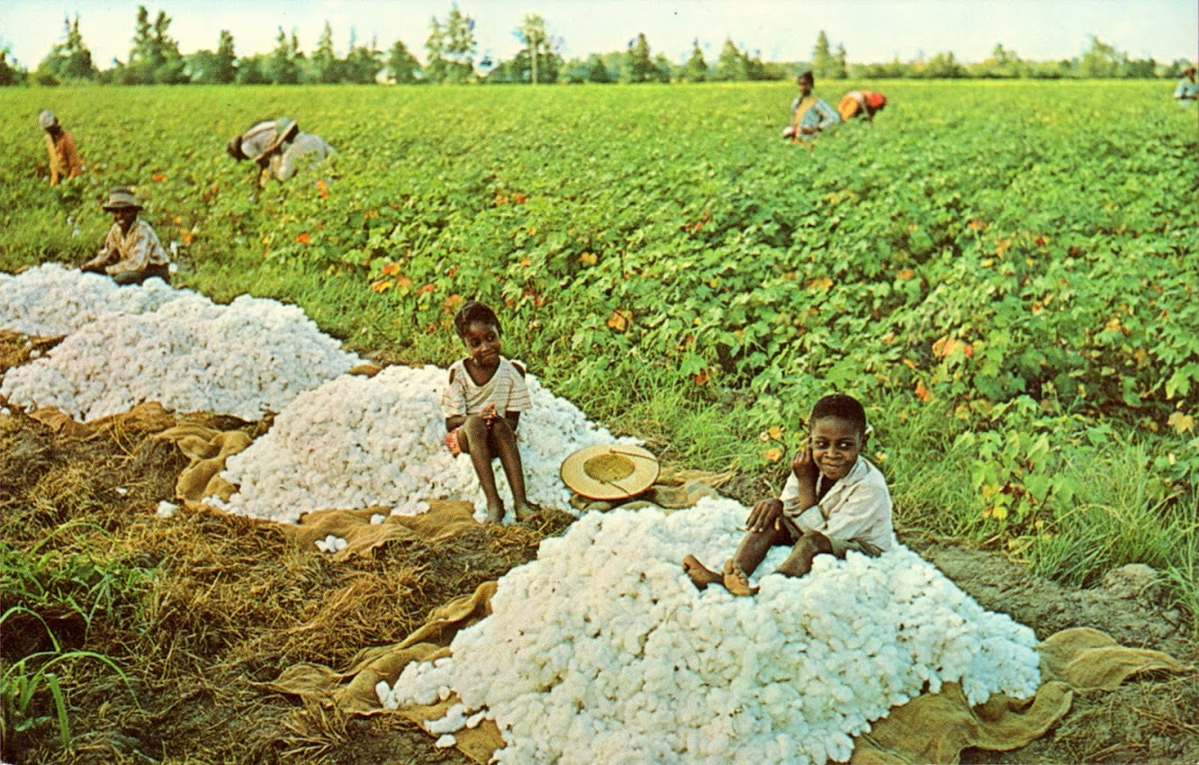 Cotton Picking Down South