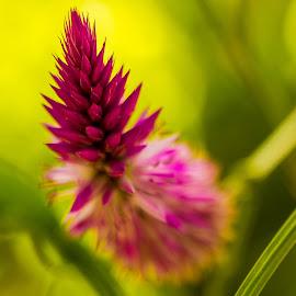 Little Flower by Emilio Portuondo - Nature Up Close Gardens & Produce ( beatiful, macro photography, colorful, little flower, plants, little, nice, colorido, good, beauty, pretty, macro art, macro, nature, bello, gorgeous, attractive, florida, wonder, nature up close, lovely, interesting, small world, flower, wonderful, unque, floral photography, macro flower, park, flora, colors, miami, bonito, nature close up, cercana, fantastic, close up, macro shot, amazing, ornamental, great, hermoso, fairchild, earth, stunning, small, garden, fabulous, south florida )